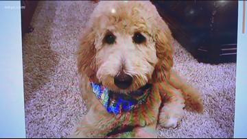 Doggone Weather: Harper