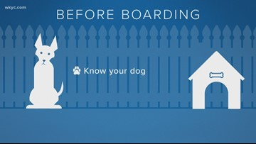 Best tips when boarding your pet