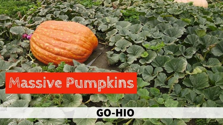 Discovering enormous pumpkins in Geauga County: GO-HIO