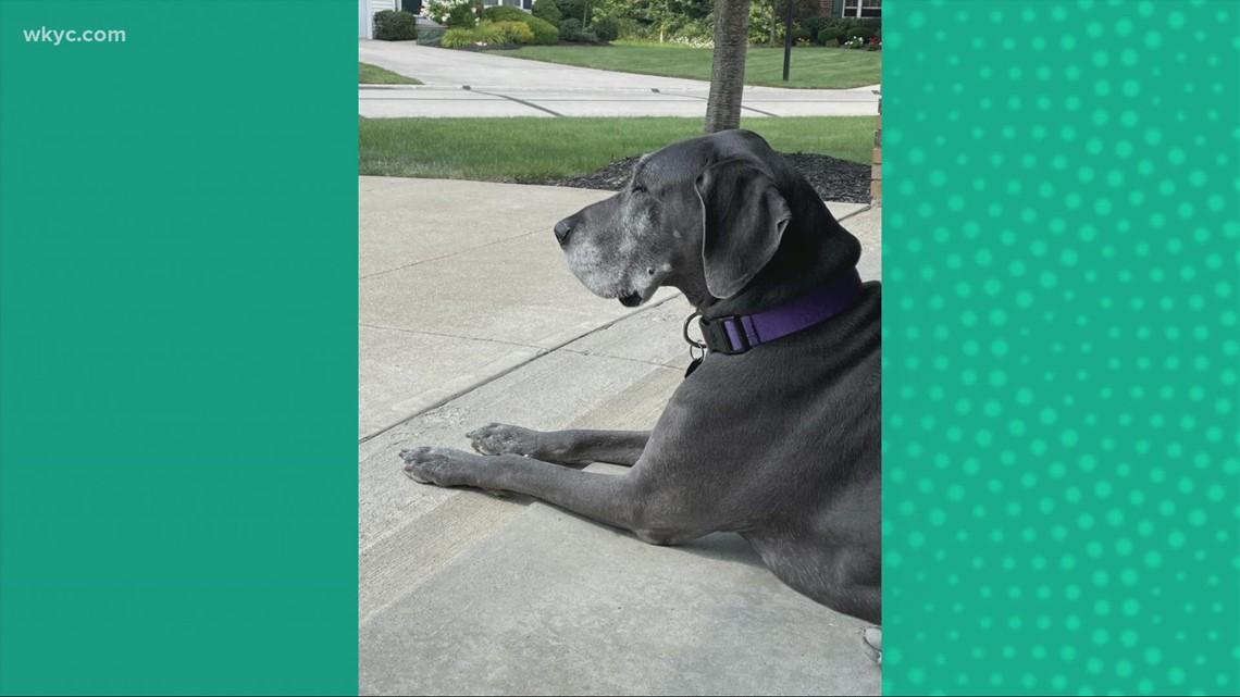 Doggone Weather: Nala