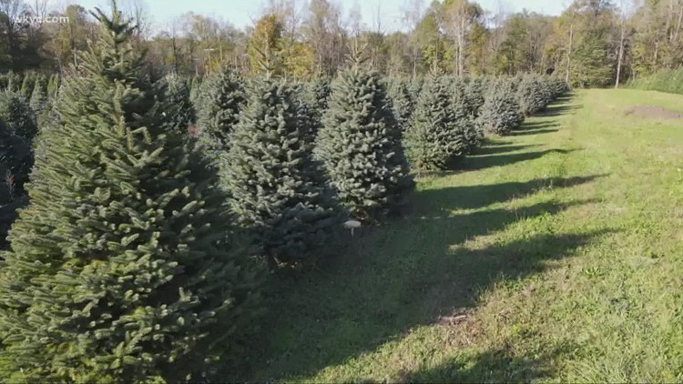 Exploring Christmas tree farms in Geauga County
