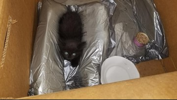 BRING HELP, RIGHT MEOW: Toledo Police respond to kitten distress call, rescue baby cat trapped inside their van