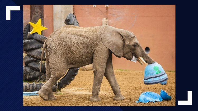 'Lucas meant so much to all of us'   Toledo Zoo: Lucas the elephant has died at age 9