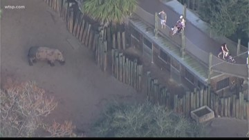 Rhinos won't be punished at Florida zoo where girl fell into exhibit