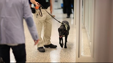 TSA reportedly moving to 'floppy-eared' dogs, so children aren't so scared